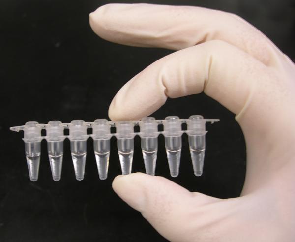 Foto av PCR-prøverør. Funnet her http://bit.ly/gfobgs