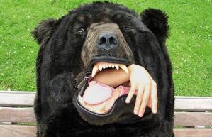 Foto av hånd inne i bjørnedrakt